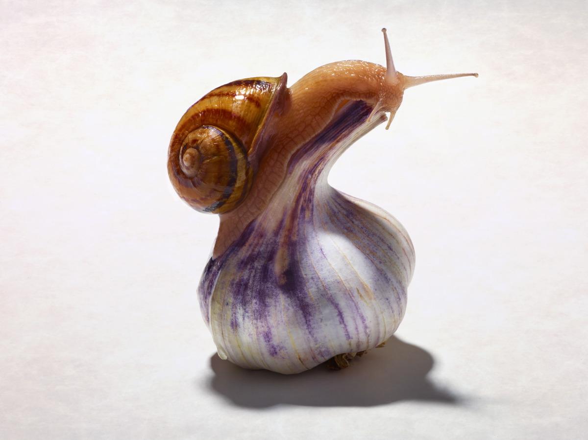 snail-rt1-2